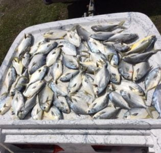 Apalach Anglers boat full of fish