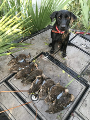Duck Hunting Trips Apalachicola Florida